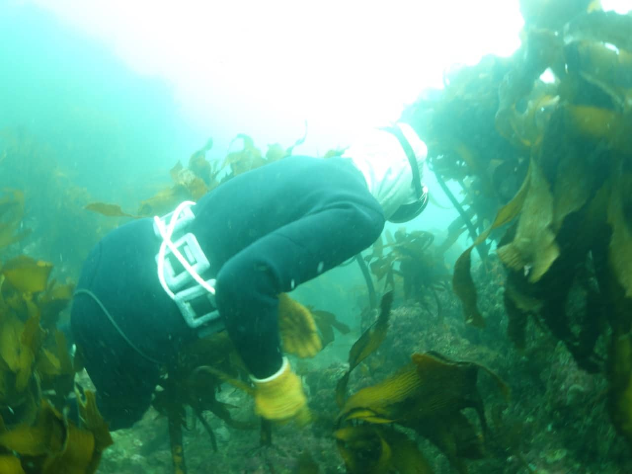 The Ama are heavily weighted for diving in less than 15m making it easy to crawl along the sea floor.