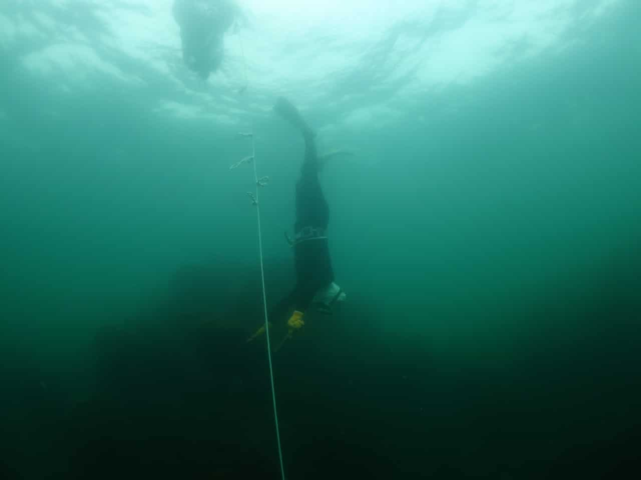 Here we have an Ama descending along her float line, a very familiar practice amongst modern freedivers.