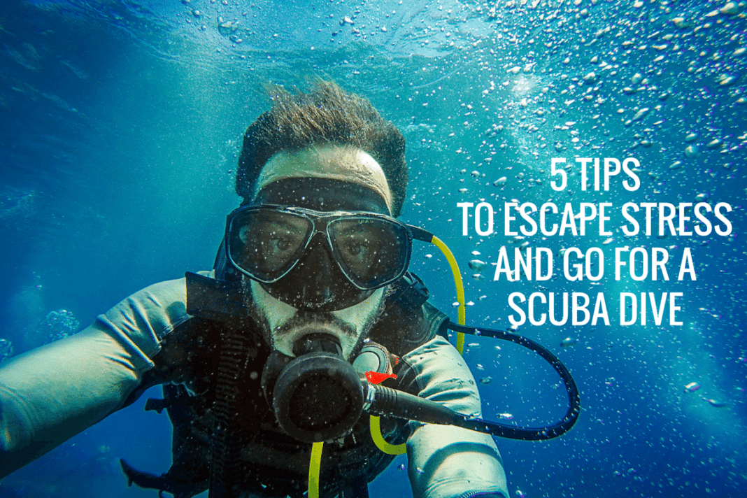 5 Tips to Escape Stress And Go For A SCUBA Dive