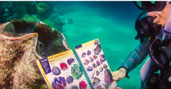 ID fish with the 'Reef Finder' underwater guidebook.