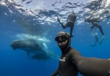 Freediving & Whale Encounters in collaboration with Alexey Molchanov © Erez Beatus