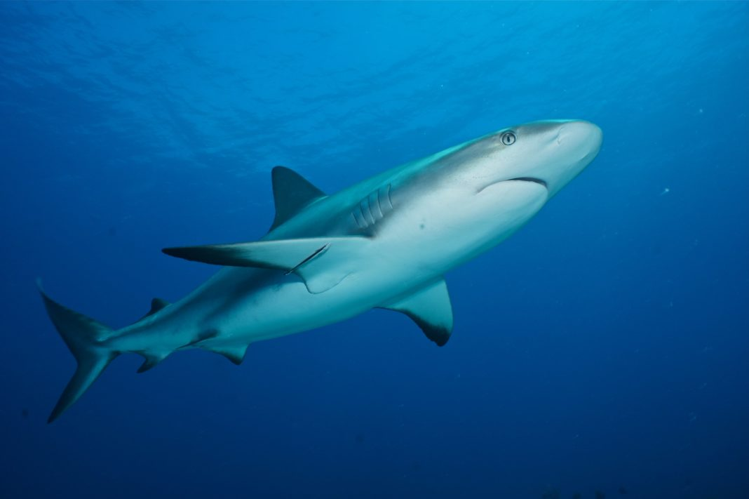 Sport Diver Bahamas Diving Bash - may include Sharks