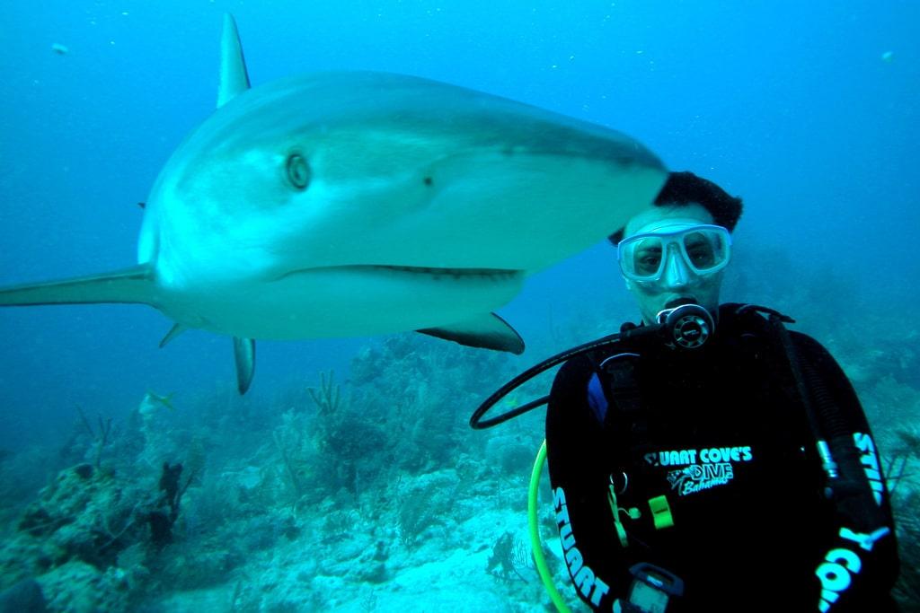 Scuba Diver and Shark. Creative Commons by Manoel Lemos https://www.flickr.com/photos/mlemos/2863736240