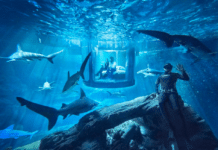 Airbnb is offering three lucky winners a chance to spend the night with sharks at the Paris Aquarium.