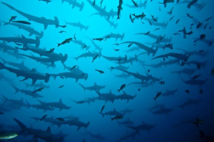 Ultimate Diving is offering a discount for Galapagos liveaboard trips.
