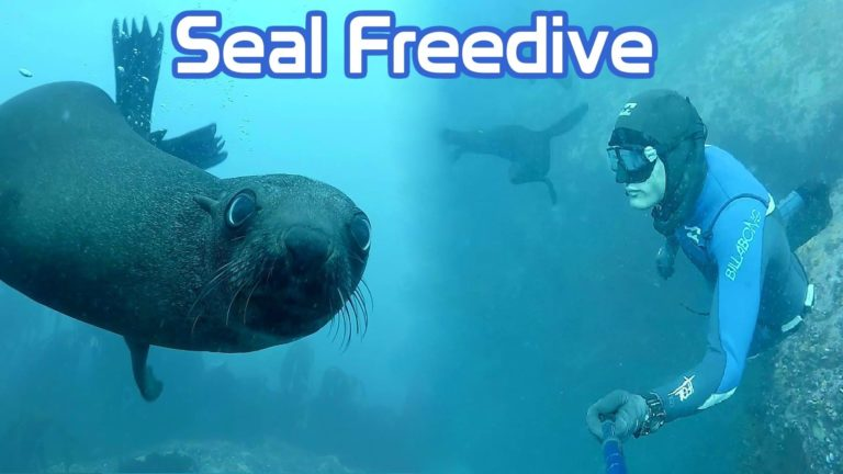 [VIDEO] Seal Freedive
