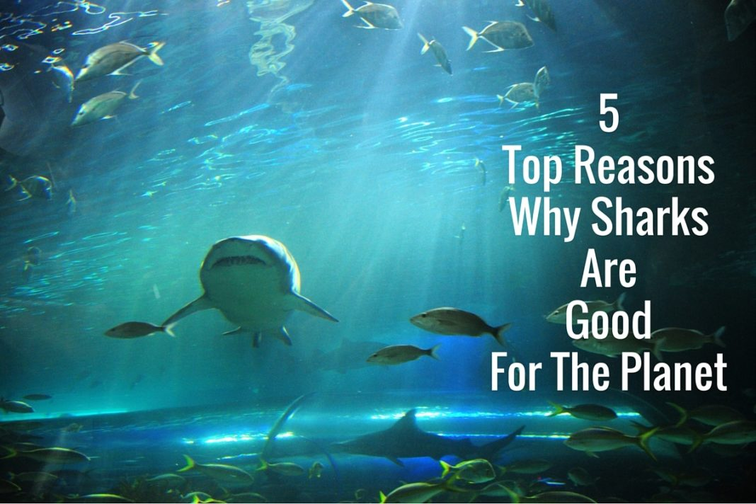 5 Top Reasons Why Sharks Are Good For The Planet