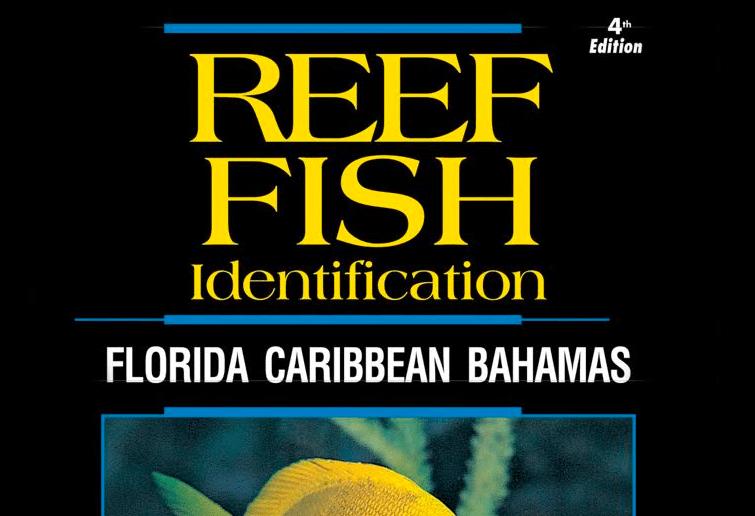 reef fish identification florida caribbean bahamas pdf