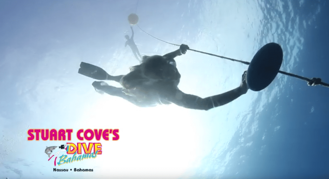 Stuart Cove's Dive Bahamas Now Offering PADI Freediver Courses