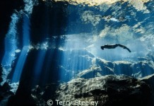 UnderwaterPhotography.com Announces 2015 Photo Contest Winners (Photo credit: World Champion Winner Terry Steely)