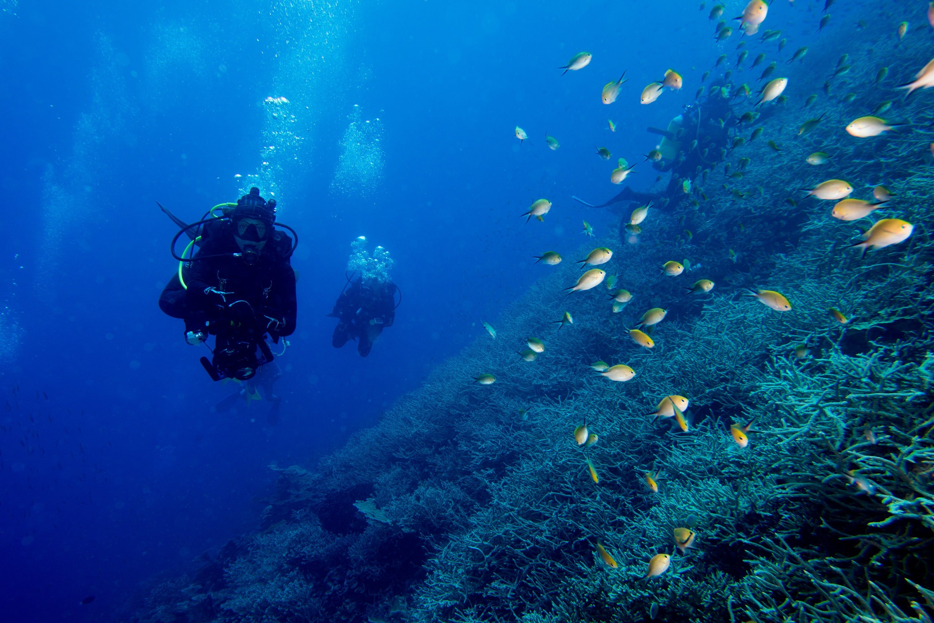 Scuba Diving in fish and corals reefs