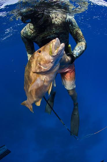 FII Launches First Standardized Spearfishing Course In USA (photo credit Cameron Kirkconnell)