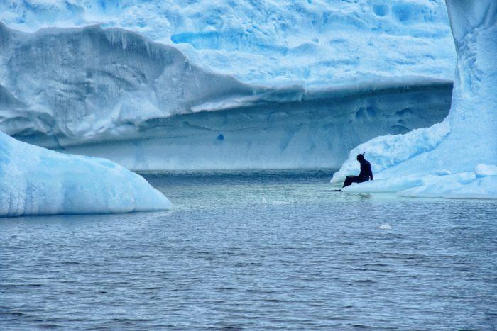 Freedive Antarctica - Will G On Iceberg