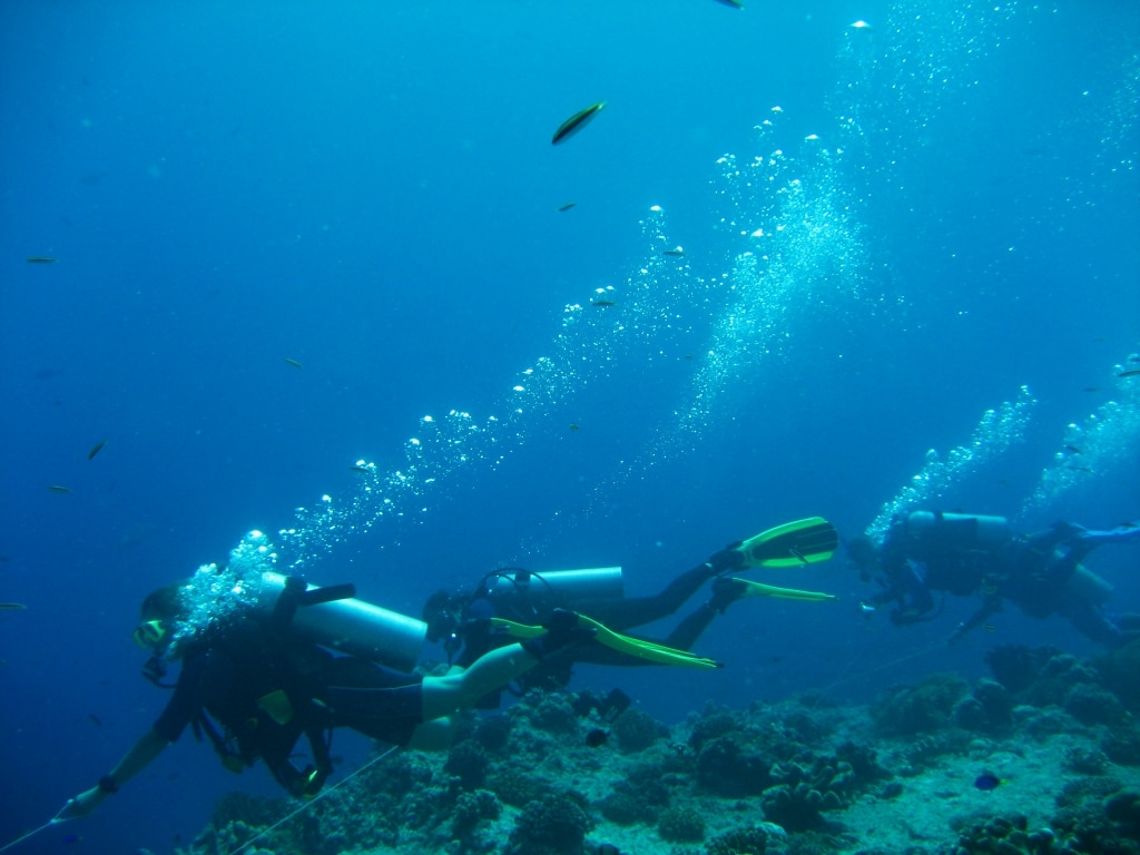 drift divers are hooked into a reef Photograph by tobze