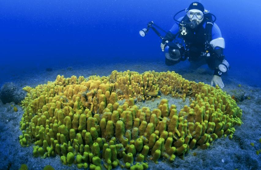 'Canary Islands Dive Photo Challenge' Underway