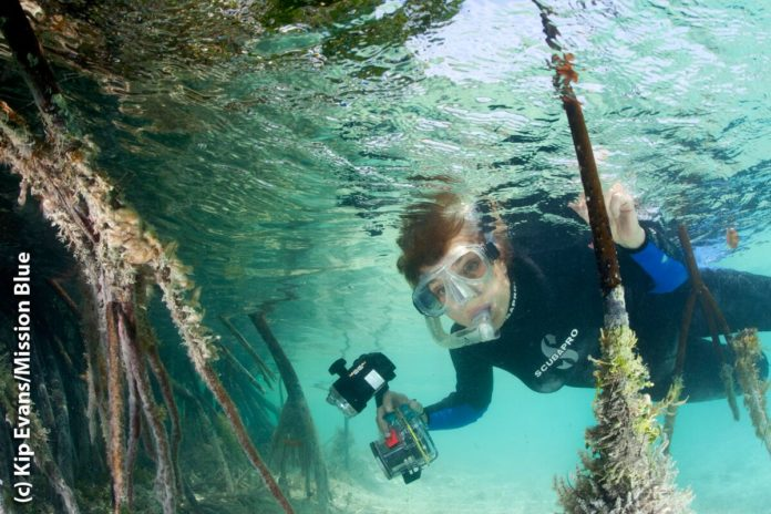 'Her Deepness' Dr. Sylvia Earle To Host Underwater Kelp Forest Livestream This Weekend