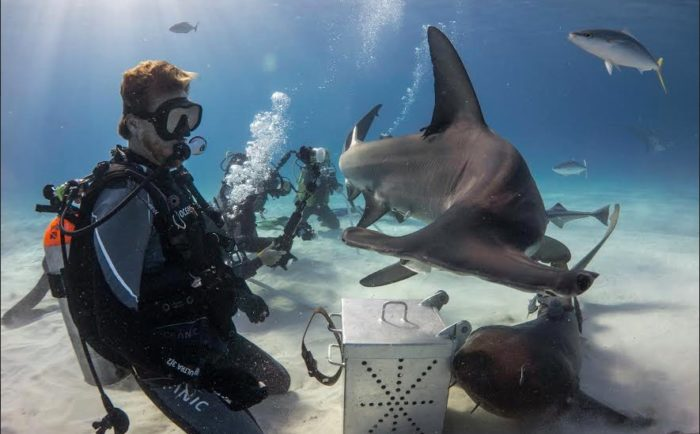 Neal Watson II interacting with the Hammerheads on Great Hammerhead Safari