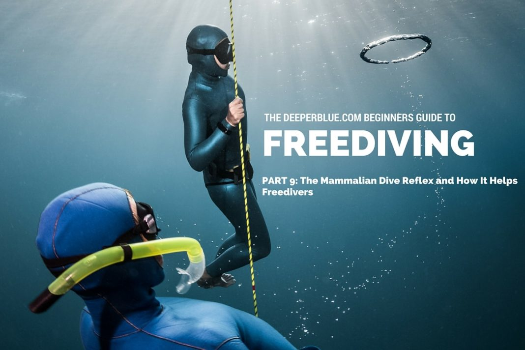 Beginners Guide to Freediving_ PART 9 - The Mammalian Dive Reflex and How It Helps Freedivers