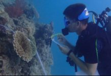 Global Vision International Offering Volunteer Marine Environment Research Trips (Photo Credit: GVI)