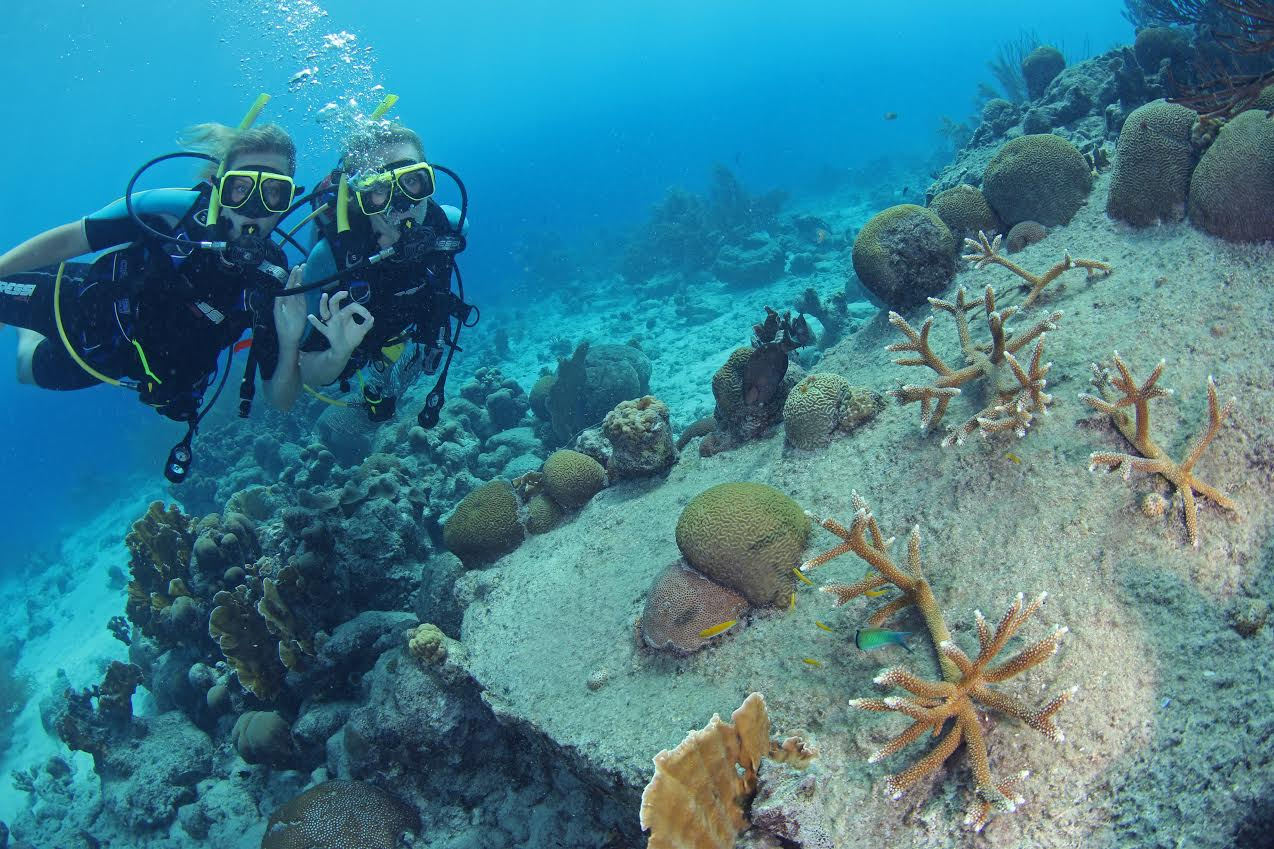 Curacao Coral Reef Restoration Effort Celebrates One-Year Anniversary