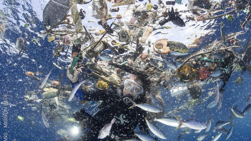 Mission Blue Organizing Online Petition To Protect The California Plastic Bag Ban