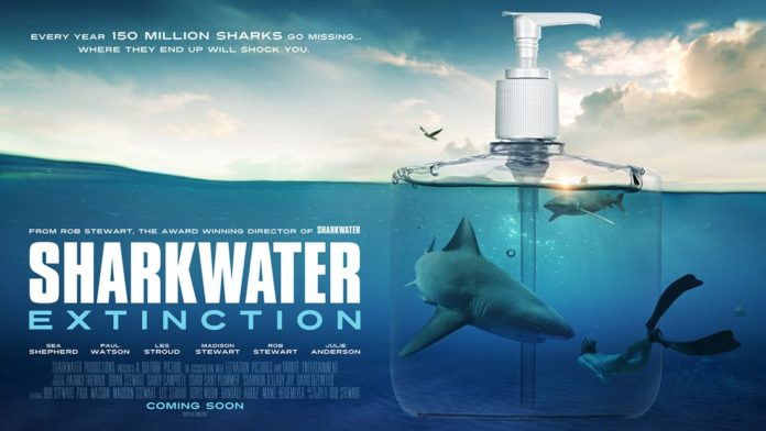 'Sharkwater' Filmmaker Making New Documentary Exposing Companies That Use Shark Fin Products