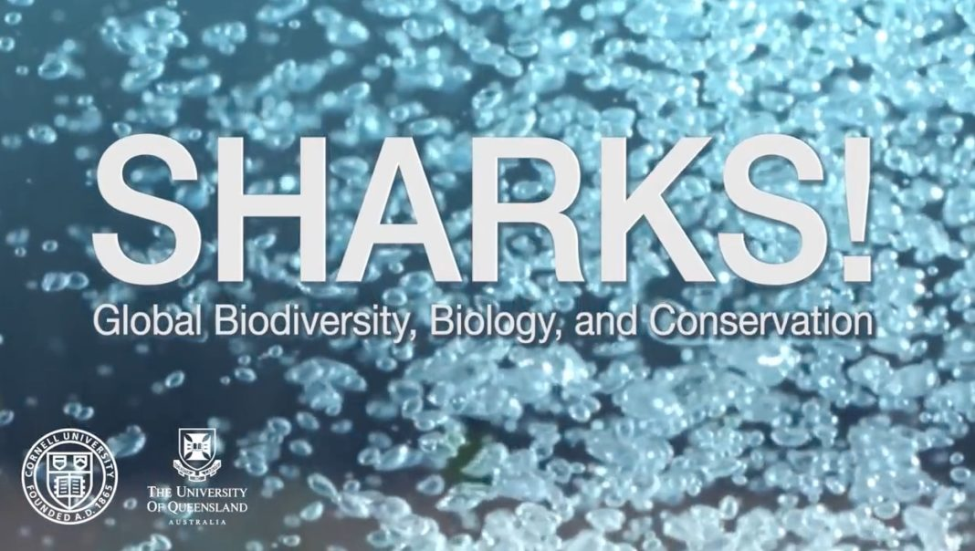 Cornell University and the University of Queensland are offering a free, online shark biology course.