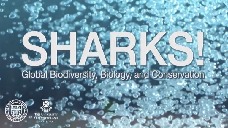 Cornell, Queensland Universities Offering Free Online Shark Biology Course