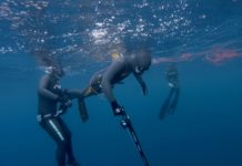 SAI (Spearfishing Academy International) is a brand new global Spearfishing Education Organization