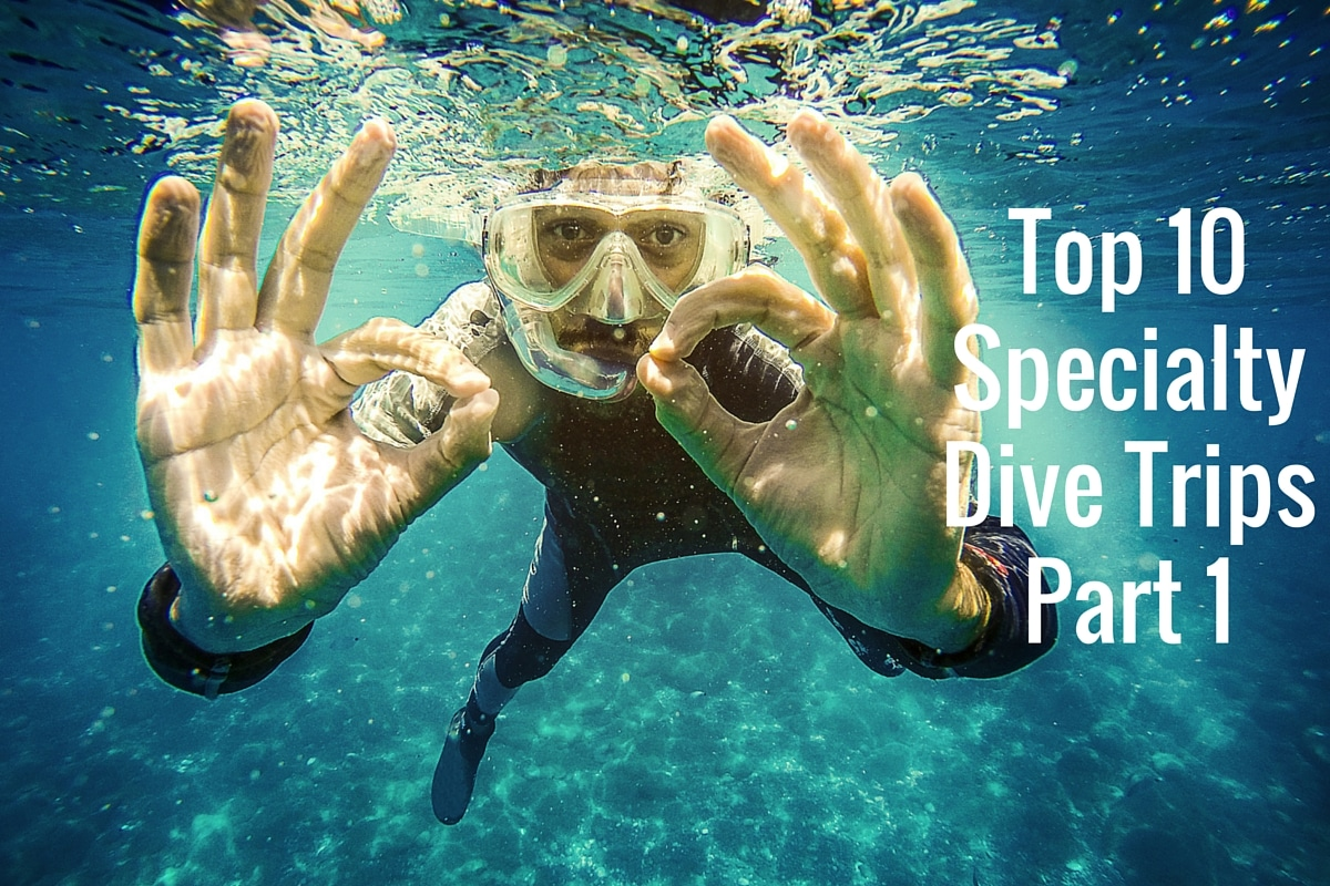Top 10 specialty dive trips part 1 - Best dive trips ...