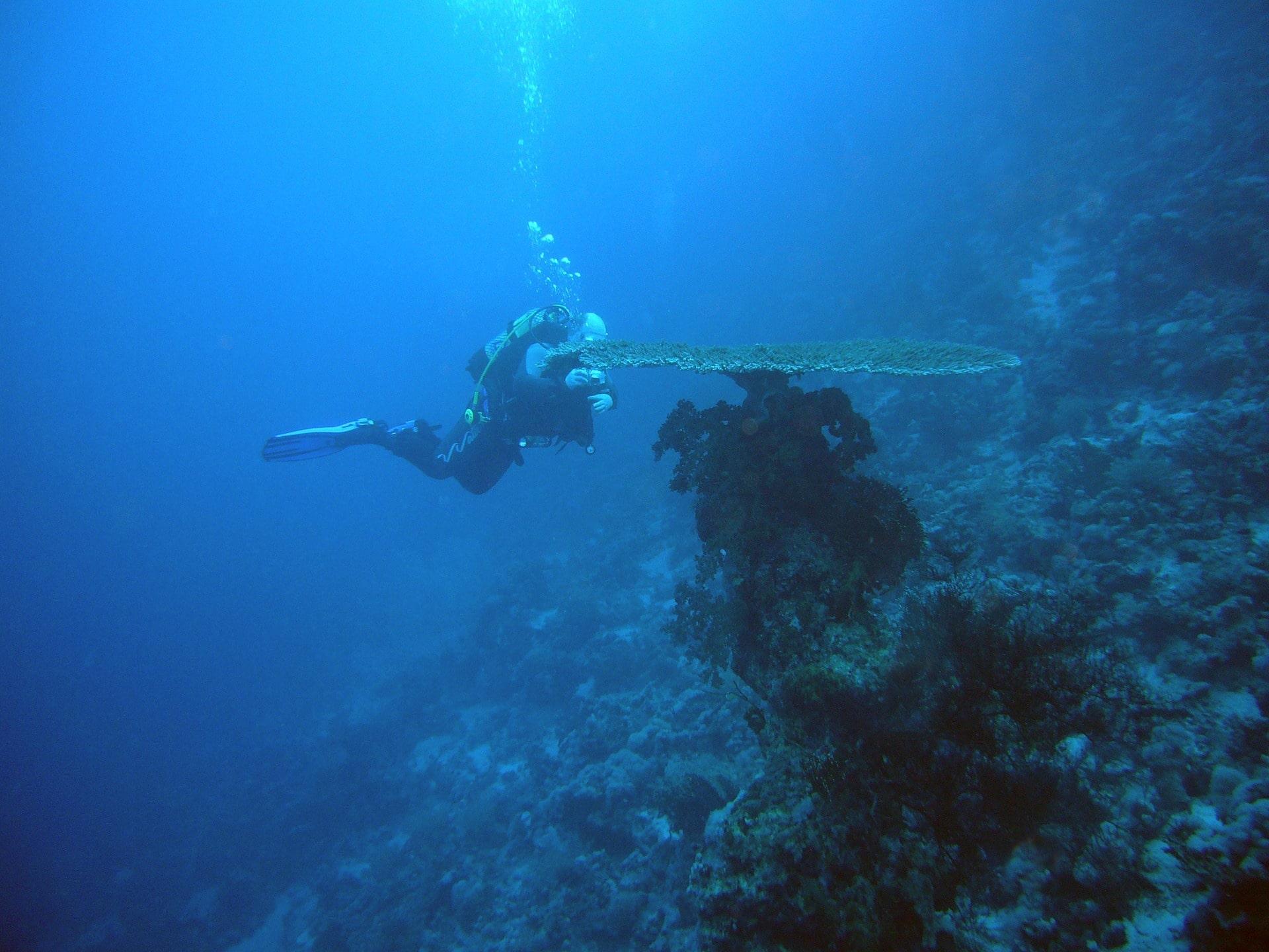 Diving Egypt