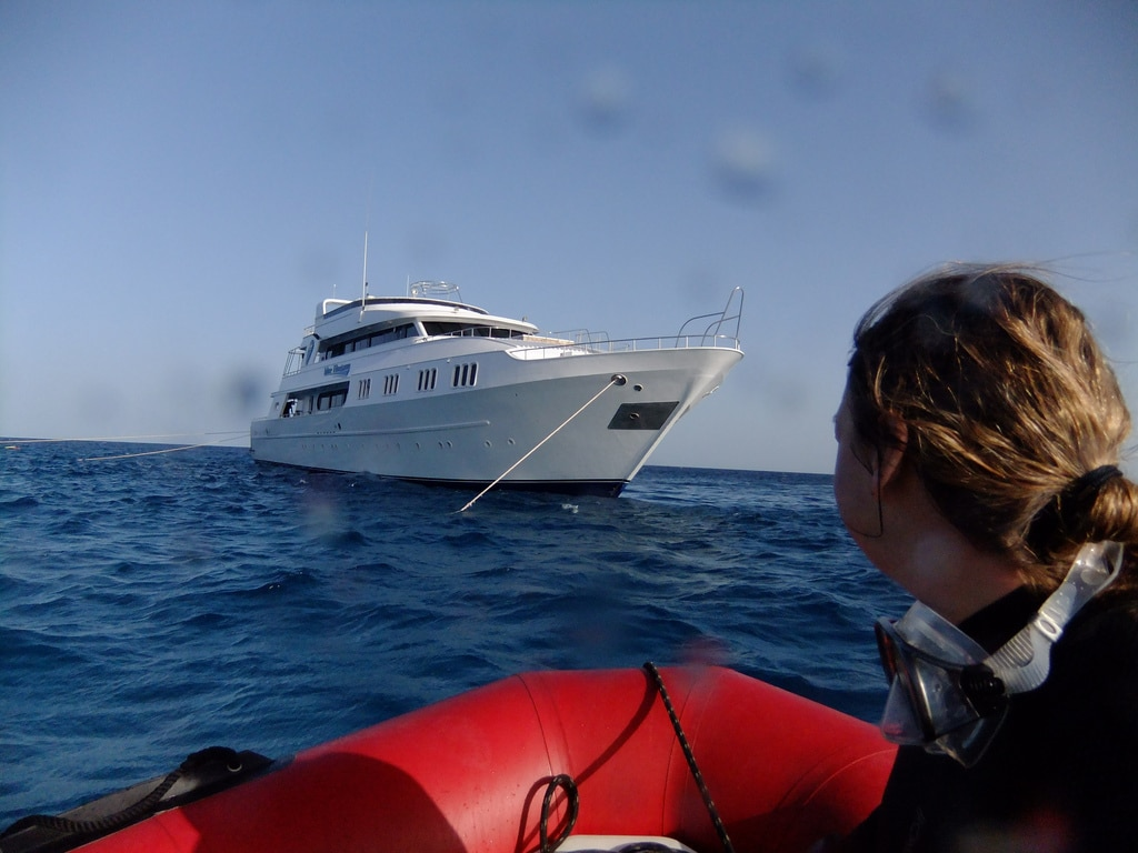 liveaboard diving the red sea
