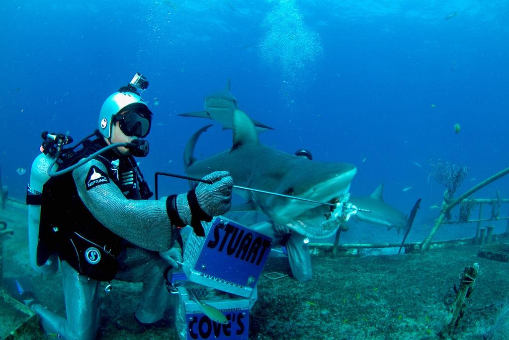Shark Feeding Photo by Sebastien Filion / Stuart Cove's