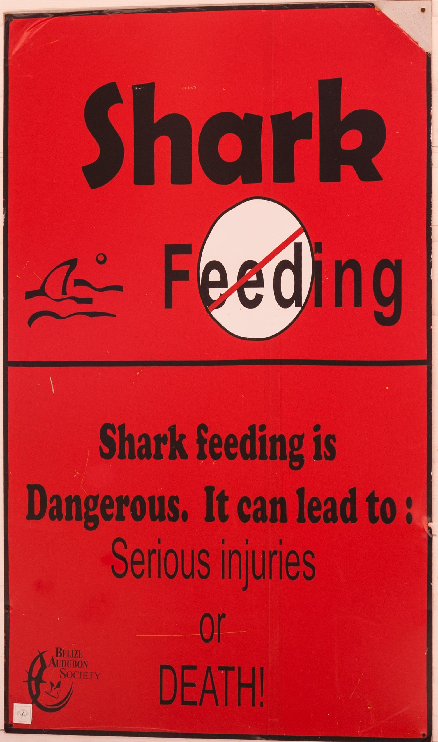 shark feeding dangers