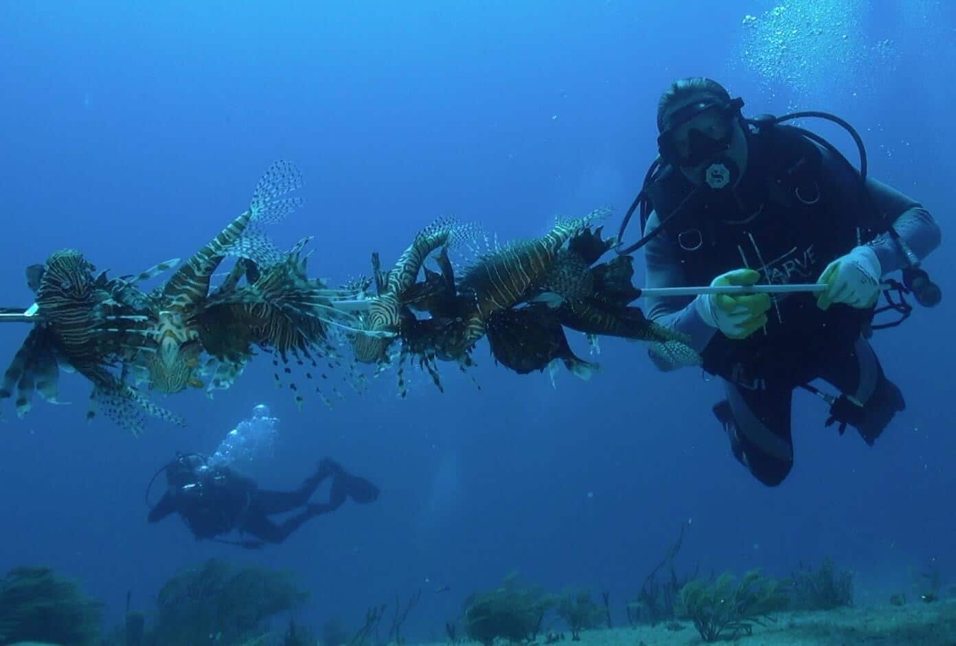 Guy Harvey Outpost Resorts Will Hold A Lionfish Derby During Its Cuba Trip