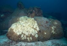 A dead coral in the East Flower Garden Bank. (Image credit: FGBNMS/G.P. Schmahl)
