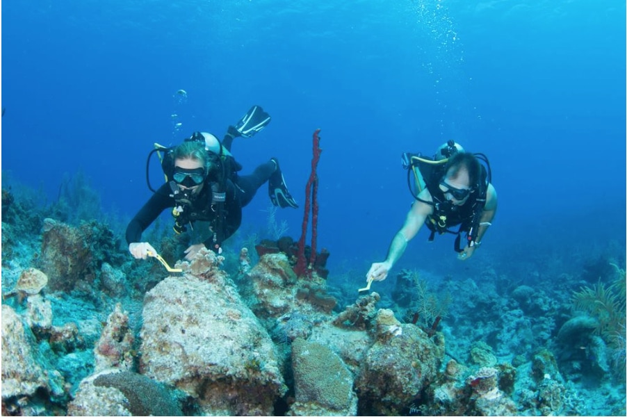 Volunteer Divers Prep Coral Fragments For Upcoming Hot Date