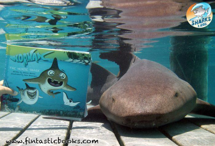 Norman The Nurse Shark with a Nurse Shark. Photo: Trace Colson