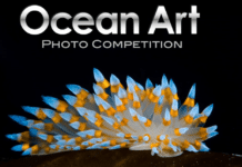 2016 Ocean Art Underwater Photo Competition Now Taking Submissions
