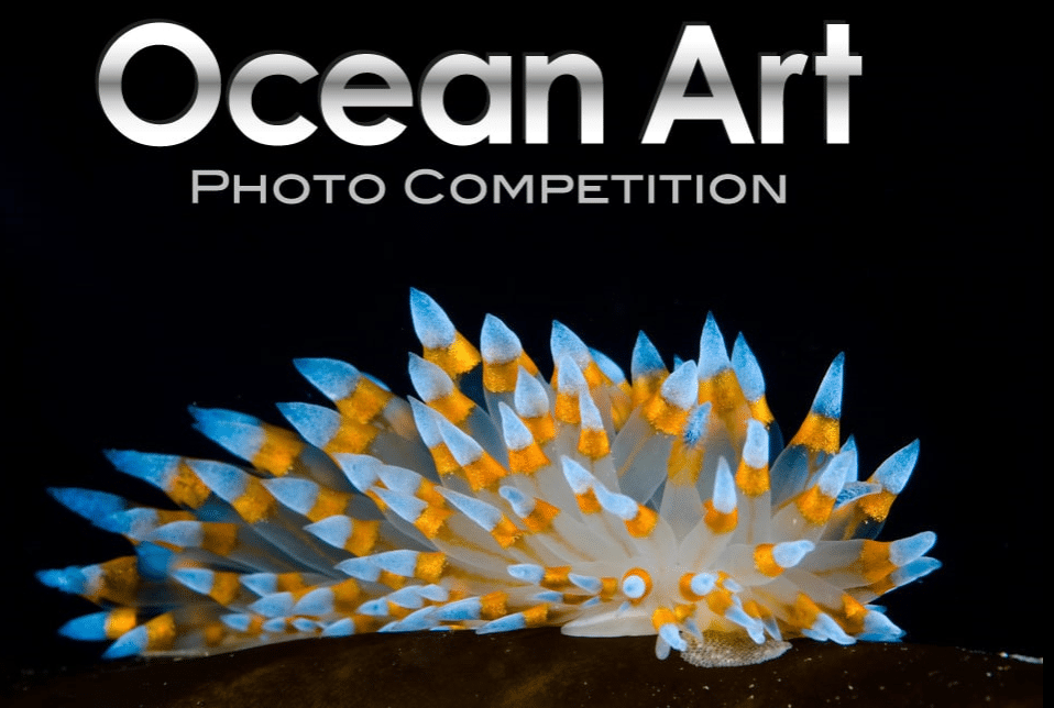 2018 Ocean Art Underwater Photo Competition Now Taking Submissions