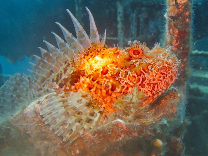 Amazing creatures you can see whilst diving in Malta