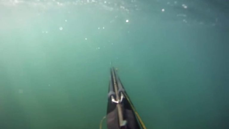 [VIDEO] Great White Shark Attack Caught On GoPro