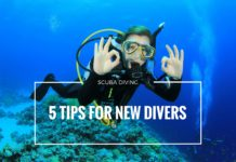 5 Tips for New Divers