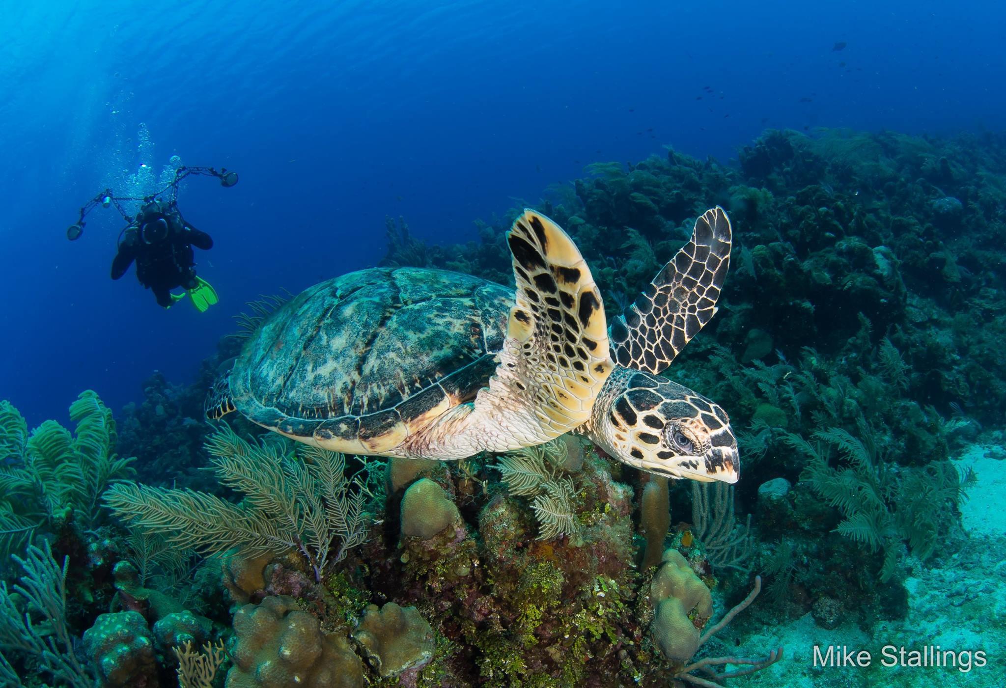 Shutterbug Mike Stallings Wins Best OF Show At Roatan Underwater Photo Festival