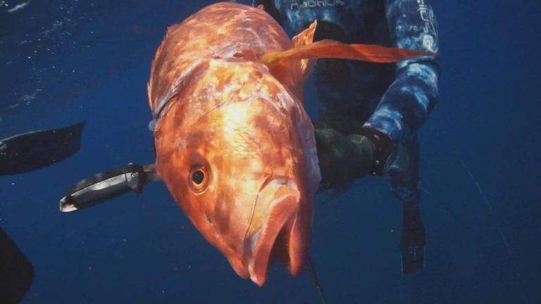 [VIDEO] Spearfishing with the SpearHeads – Soul Spearfishing Costa Rica