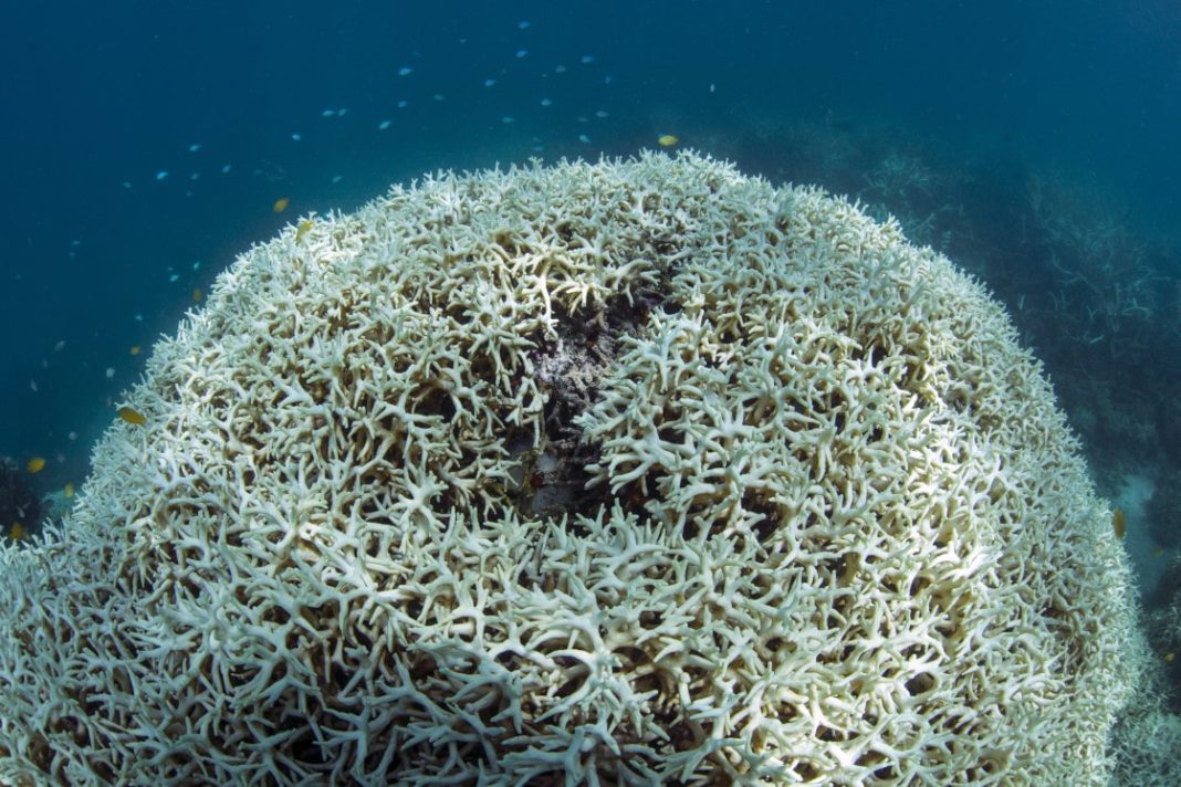 Documenting the dead coral after the bleaching event at Lizard Island on the Great Barrier Reef, captured by The Ocean Agency / XL Catlin Seaview Survey in May 2016.