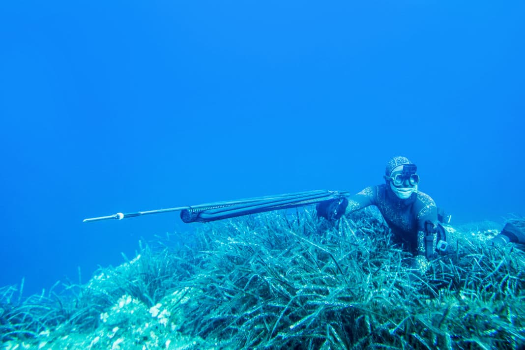 underwater hunter lies at the bottom of the sea with a speargun in anticipation of a shot at the fish