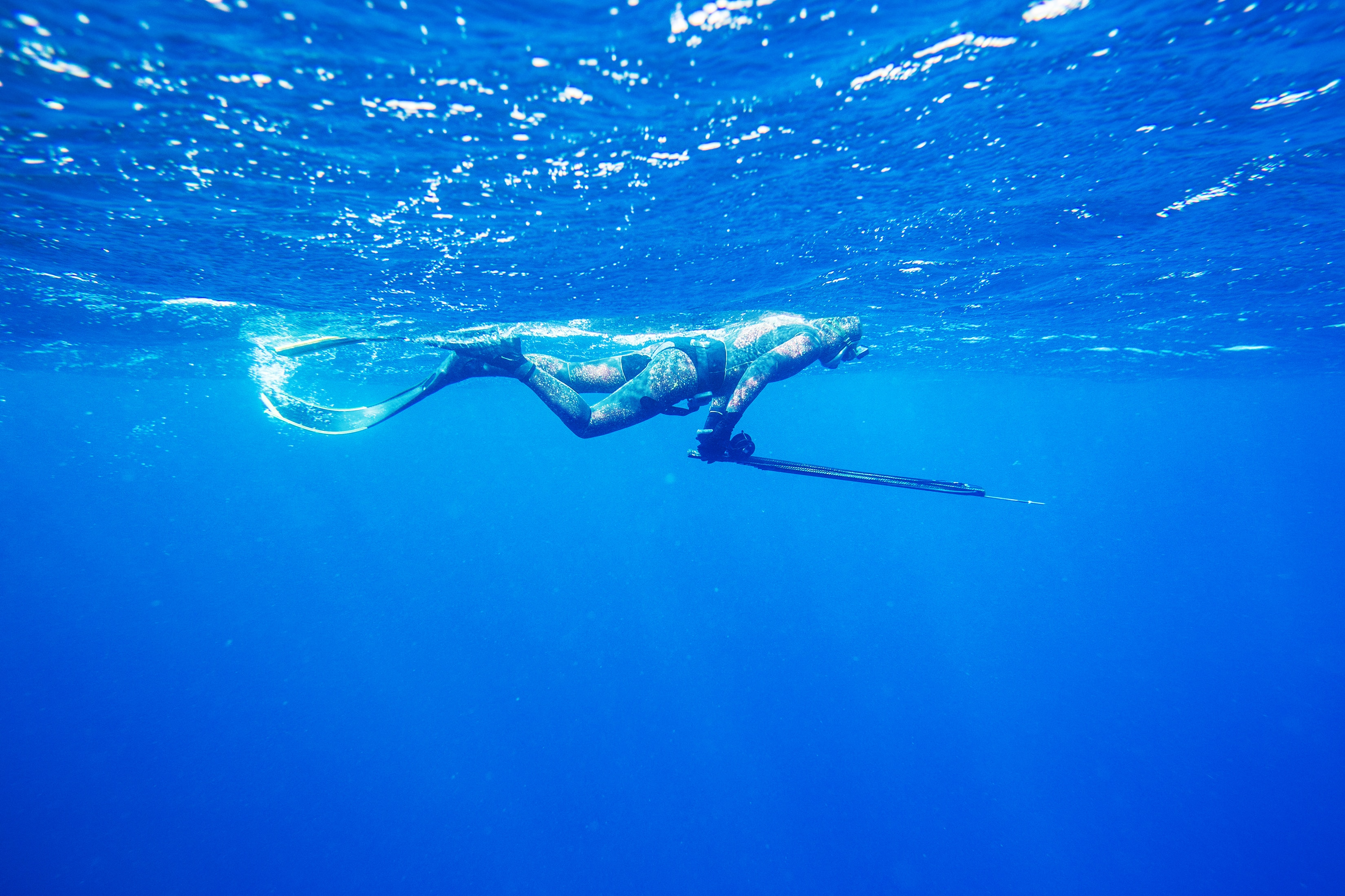 spearfisher swims on the surface of the sea before diving