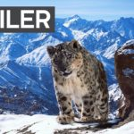 'Planet Earth II' Premieres On BBC America on January 28th