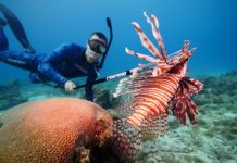 Lionfish caught with a Cressi Polespear
